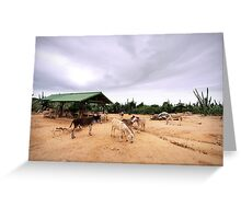 Aruba Donkeys Greeting Card
