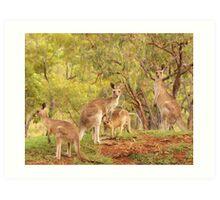 Eastern Grey Kangaroos Art Print