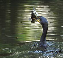 Cormorant & Catfish by Joe Jennelle
