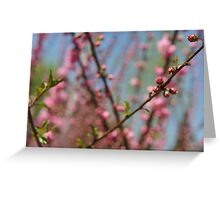 Cherry Blossoms in Beijing - 2 Greeting Card