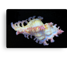 Tiny Murex Shell Canvas Print