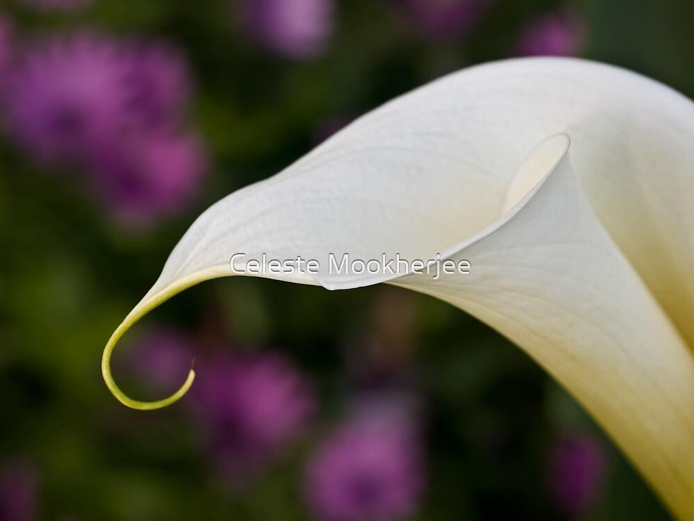 Calla lily in field of daisies by Celeste Mookherjee