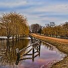 Willows in The Water by pshootermike