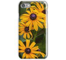 Black-eyed Susans iPhone Case/Skin