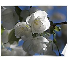 Blooming Brilliance Poster