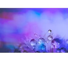 Sprinkles and Dewdrops Photographic Print