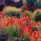 Spring Blooms by Barbara Manis