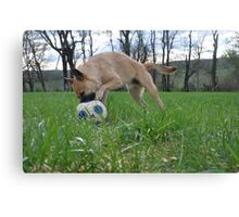 Doggy Dribble  Canvas Print