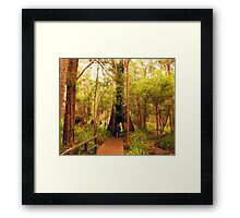 Walking through a tree Framed Print