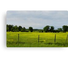 Cows  In Summer  Pasture Canvas Print