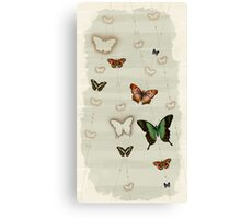 Butterfly Coordinates iii Canvas Print