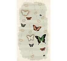Butterfly Coordinates iii Photographic Print