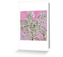White Wild Cow Parsnip Flower Greeting Card