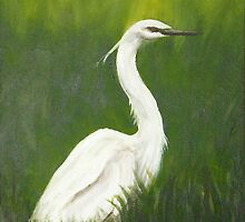 white heron by David Drousiotis