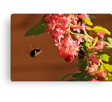 Bumble Bee in flight Canvas Print