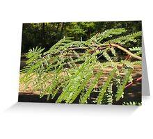 Selective focus on the young acacia branch with leaves and large spikes Greeting Card