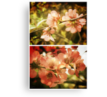 Spring - Japanese Quince Canvas Print