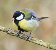 Great Tit by DutchLumix