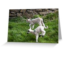 Pair of Woolly Jumpers Greeting Card