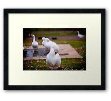 Goose in Half Framed Print