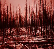 After the fire - Yellowstone Park 1990 by Marlies Odehnal