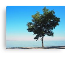 Lonely tree with green leaves on the coast  Canvas Print