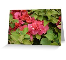 White Buds in Bright Red Flowers Surrounded by Dark Green Plants Greeting Card