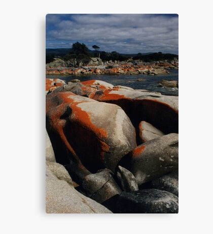 Red Lichen on Rocks by Sea, Tasmania, Australia Canvas Print