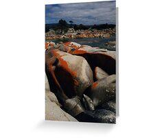 Red Lichen on Rocks by Sea, Tasmania, Australia Greeting Card