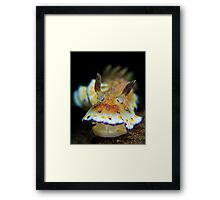 Nudibranch - Chromodoris Collingwoodi Framed Print