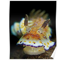 Nudibranch - Chromodoris Collingwoodi Poster