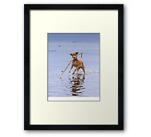 Isabella Spearfishing Framed Print