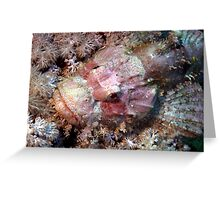 Camouflaged Pink Scorpion Fish in the Red Sea Greeting Card