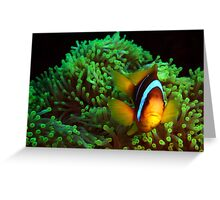 Anemone Fish in Green Anemone Greeting Card