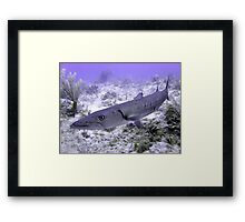 Up Close and Personal with a Barracuda Framed Print