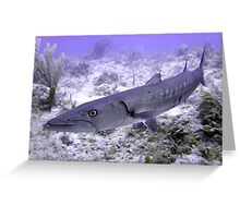 Up Close and Personal with a Barracuda Greeting Card