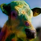 Moo! by Neil Carey