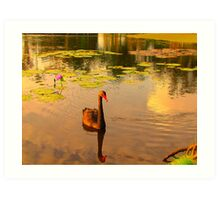 Symbol of West Australia, the Black Swan Art Print
