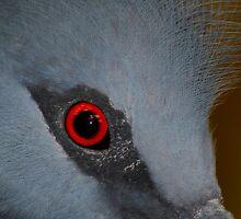 Victoria Crowned Pigeon Eye by SerenaB