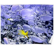 School of Bigeye and Yellowtail Snapper Poster