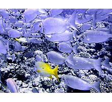 School of Bigeye and Yellowtail Snapper Photographic Print