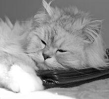 sleeping cat (black&white) by Lou Wilson