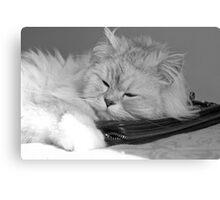 sleeping cat (black&white) Canvas Print