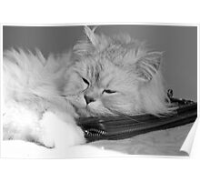 sleeping cat (black&white) Poster