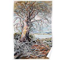 Tree - Central Highlands Tasmania Poster