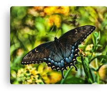 BUTTTERFLY ON A SUMMER MORN Canvas Print