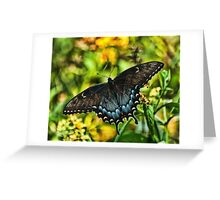 BUTTTERFLY ON A SUMMER MORN Greeting Card