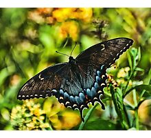 BUTTTERFLY ON A SUMMER MORN Photographic Print