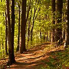 Walden Woods by Sam Scholes