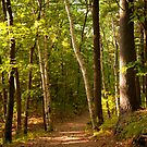 Path Thru The Woods by Sam Scholes